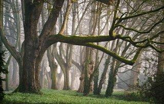 rôle des arbres
